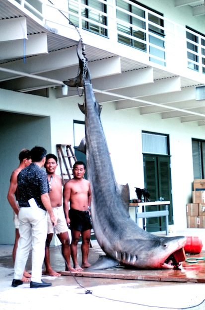 Shark hunting and illegal trade