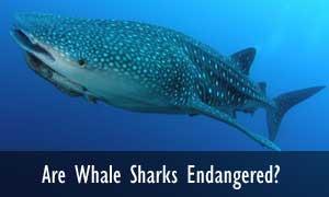 Shark FAQ