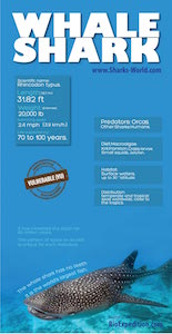 Whale shark facts on infographic