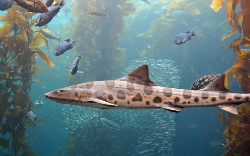 Characteristics of sharks.