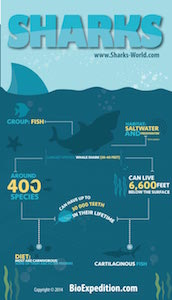 Shark facts on infographic.
