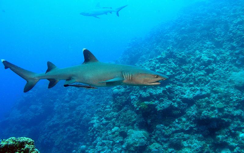 Shark Social Structure