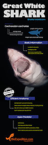 Facts about Great white shark