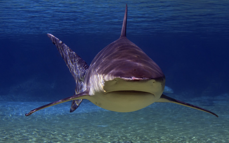 Diagram Of Sharks Swim Were - Search For Wiring Diagrams •