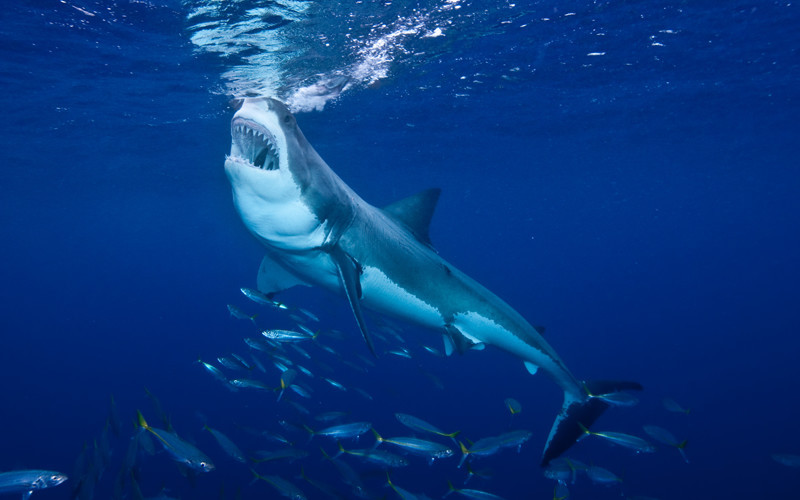 Why Defend the Sharks?