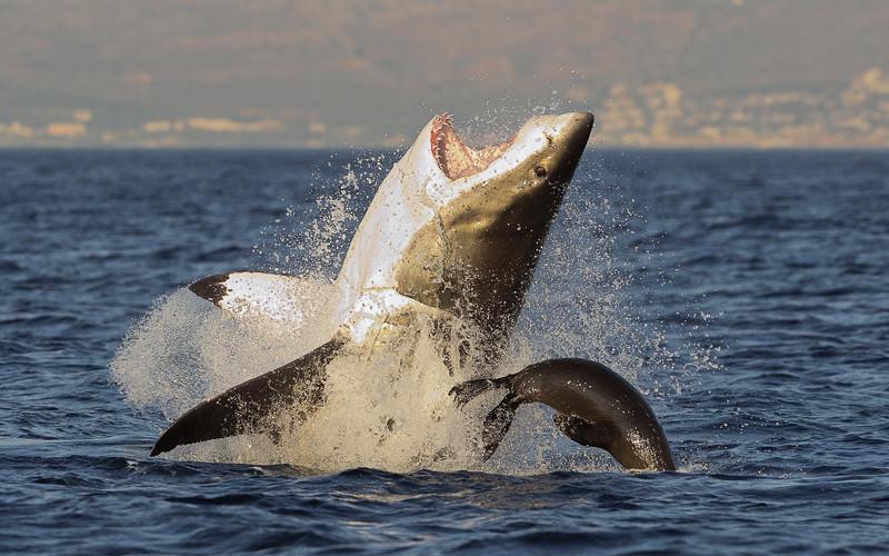 What do Sharks Eat?
