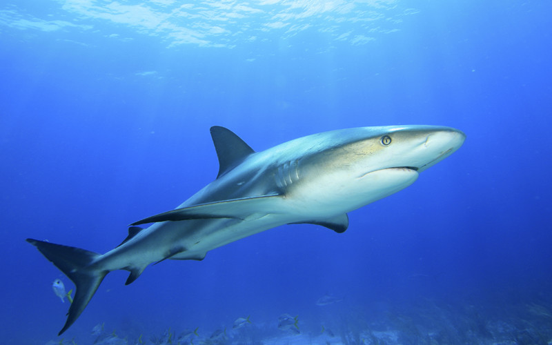 Sharks and Global Warming - Shark Facts and Information