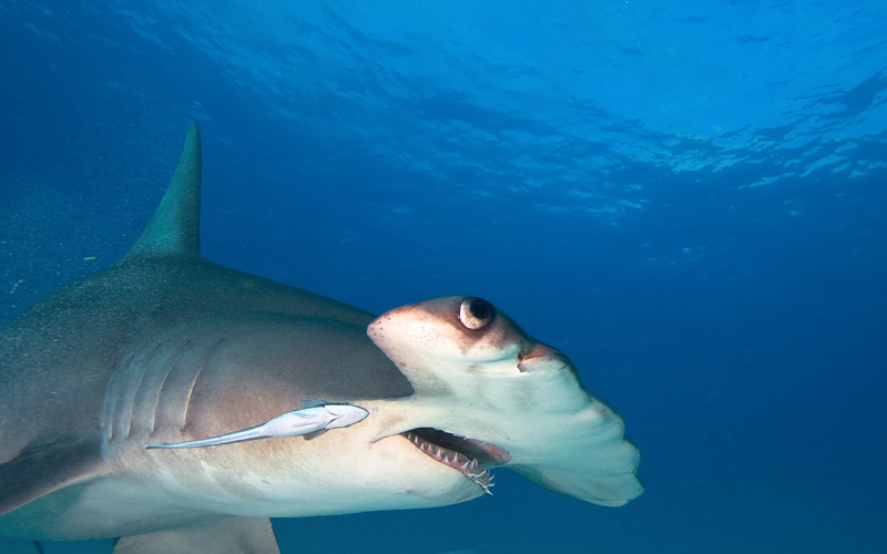 how are sharks and dolphins alike