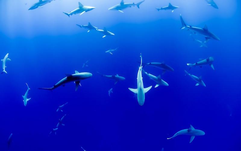 Shark Behavior