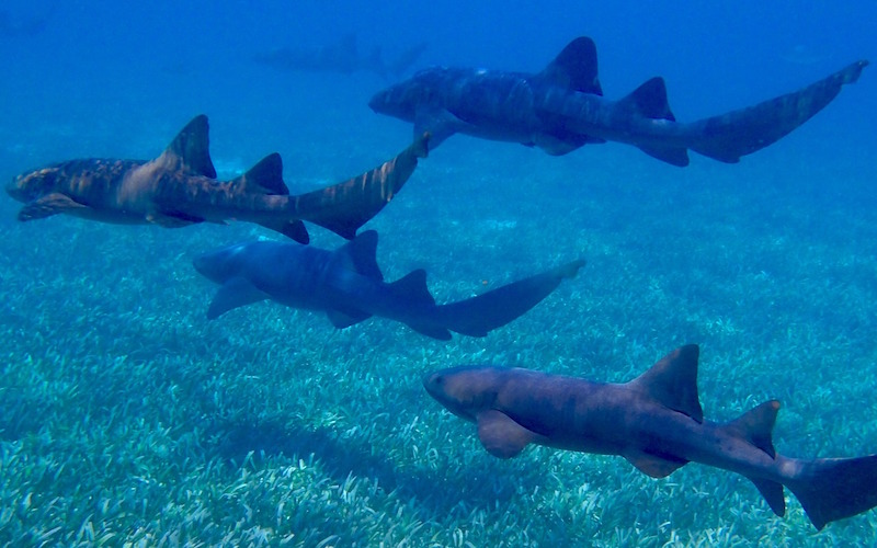 Sharks social behavior.